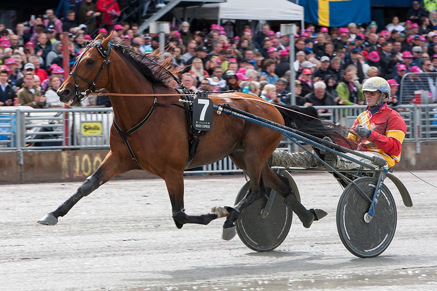 Readly Express wint serie elitloppet 2019
